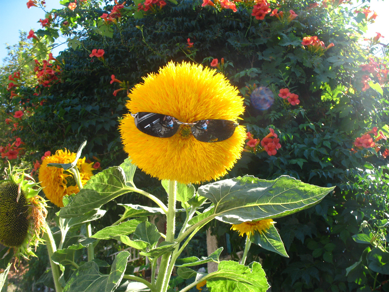 http://bizwebsolutions.co.uk/wp-content/gallery/demonstration-image-gallery/funny-flower.jpg
